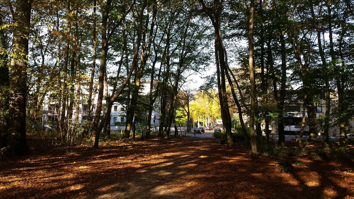 Köln Stadtwald