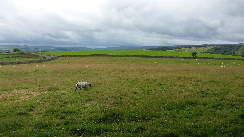 Hadrians Wall Landschaft